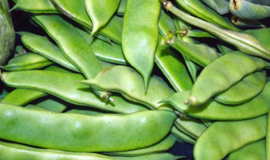 broad_beans_avarakkai